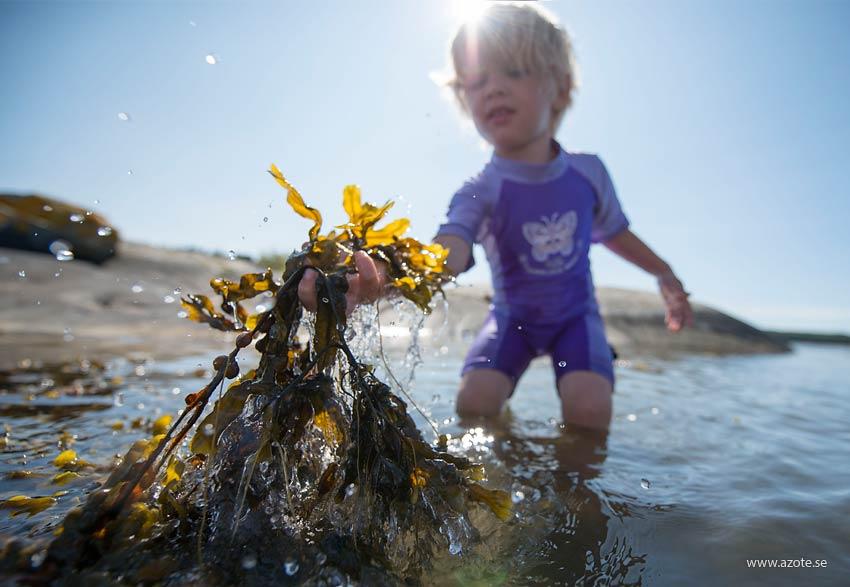 Pojke leker med blåstång som han hittat på grunt vatten. Foto J Lokrantz/Azote