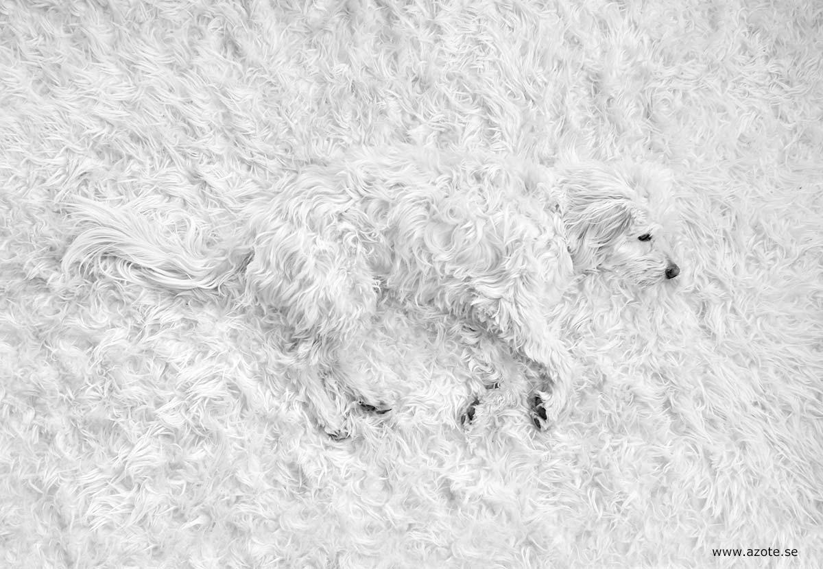 Kamouflerad hund